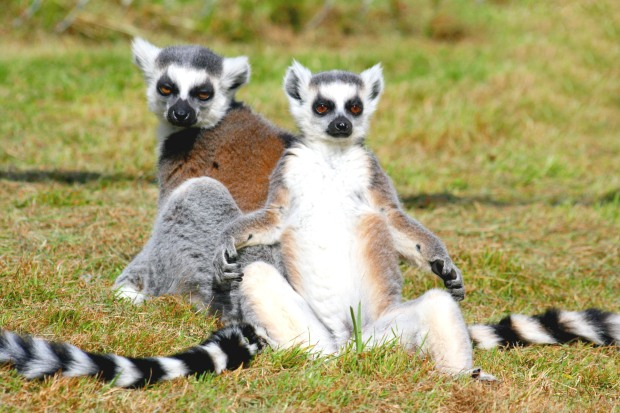 island of lemurs