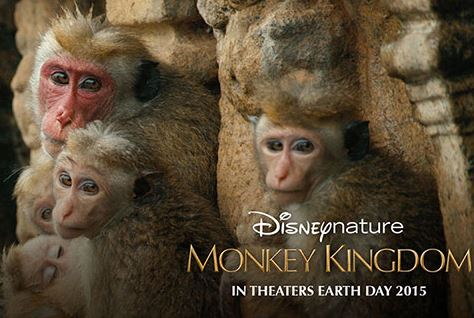 Disneynature's Monkey Kingdom - Official US Trailer 2